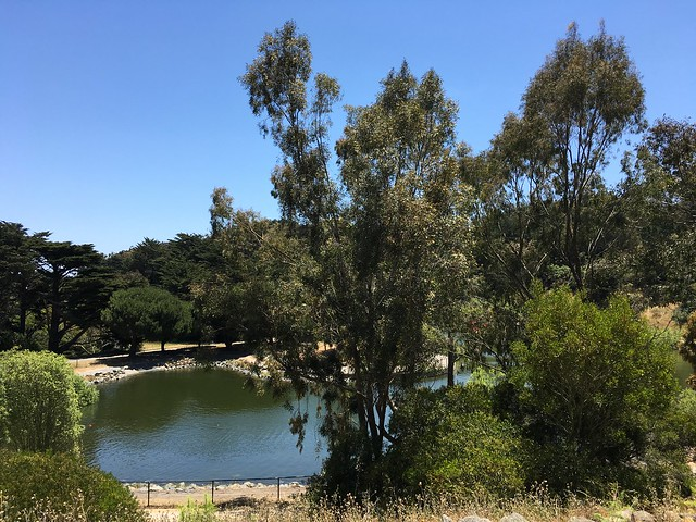 McClaren Park, San Francisco, Apple iPhone 6s, iPhone 6s back camera 4.15mm f/2.2