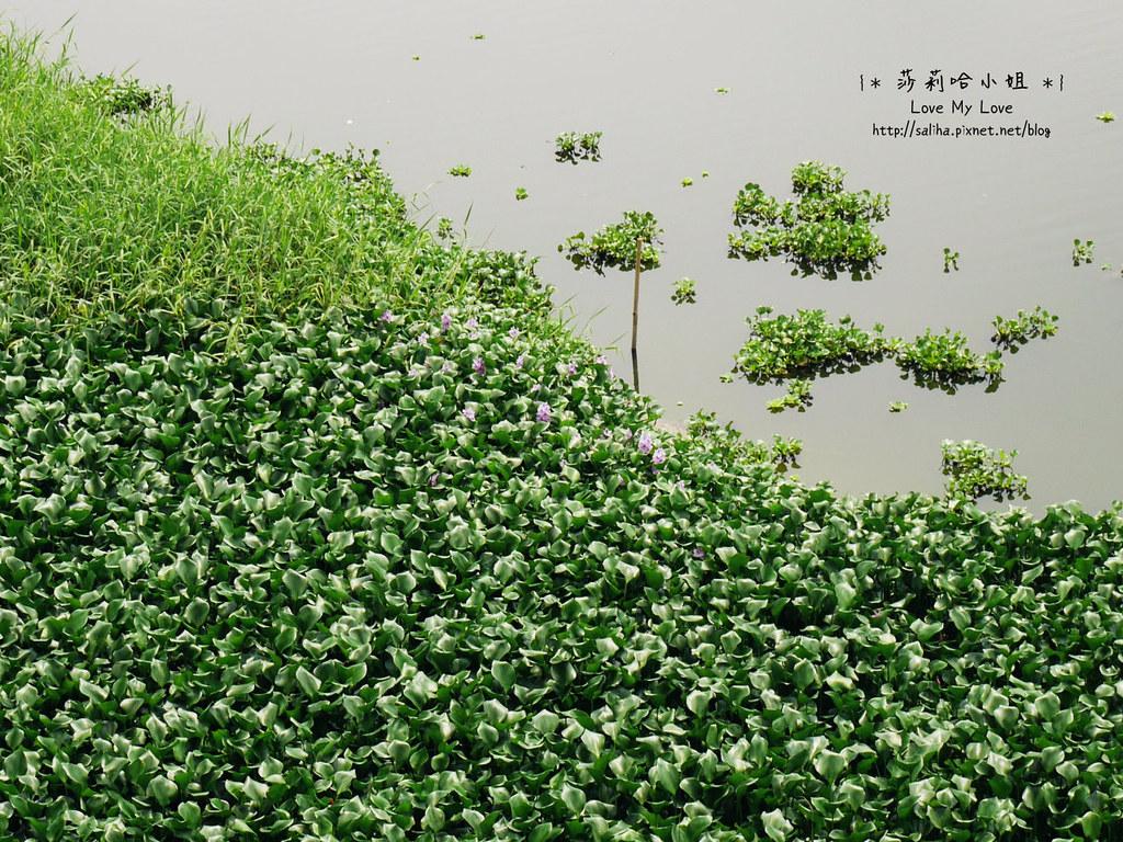 新竹一日遊景點推薦峨眉湖 (8)