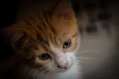 Cats cutee