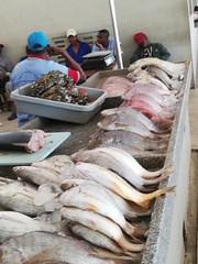 Mercardo de Peixe, Maputo, Mozambique