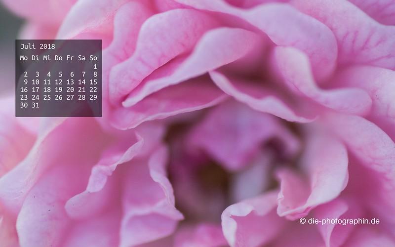 072018-rose-makro-wallpaperliebe-diephotographin