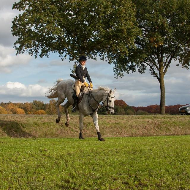Midland Hunt Landhorst 2015-9058