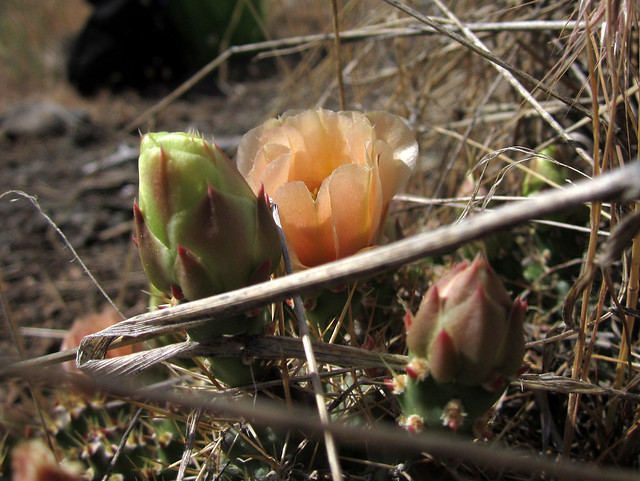 Wild Cactus, Canon POWERSHOT A2200