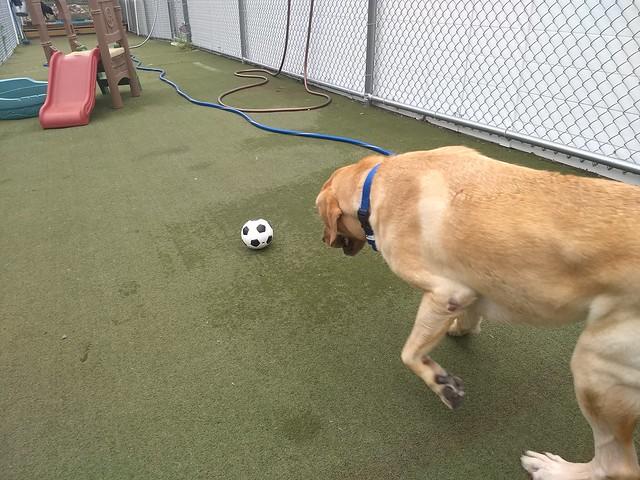 07/21/18 Soccer play! :)
