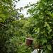 Scotland's Gardens Craigintinney Telferton July 2018 -106
