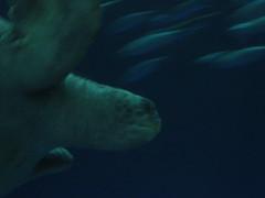 animal, marine mammal, marine biology, underwater,