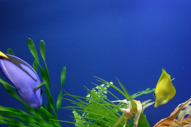 Colourful Fish - Flickr CC loimere