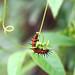 Acrobatic Caterpillar :) by svenkataraman