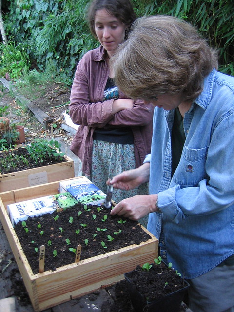 Catherine Pricking Out