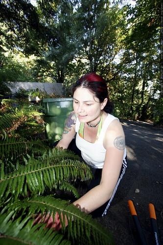 planting ferns    mg 1480