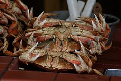 spiny lobster(0.0), lobster(0.0), american lobster(0.0), crab(1.0), animal(1.0), crustacean(1.0), fish(1.0), seafood(1.0), invertebrate(1.0), dungeness crab(1.0), food(1.0),