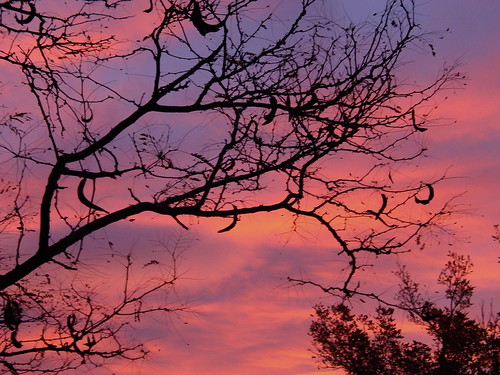 trees sky color clouds sunrise colorado denver