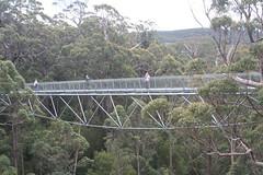 truss bridge(0.0), rolling stock(0.0), arch bridge(0.0), viaduct(0.0), cable-stayed bridge(0.0), suspension bridge(1.0), canopy walkway(1.0), bridge(1.0),