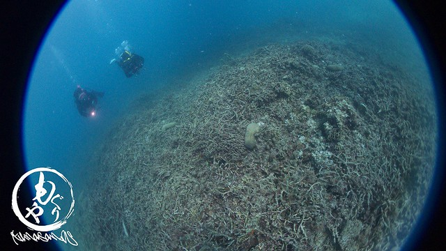 サンゴの復活はまだかなぁ。。。