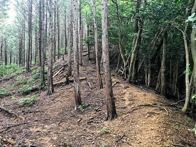 大茂山 森の境界