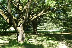 Planting Fields Arboretum (87)