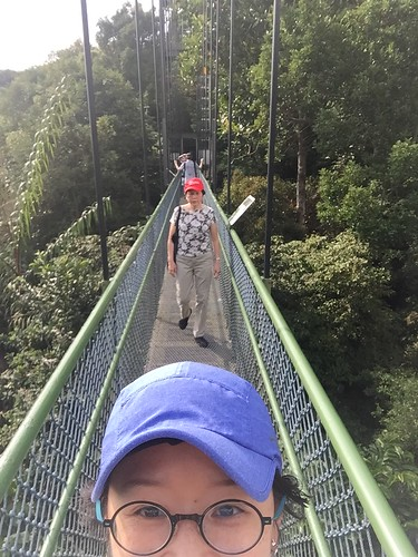 Treetop Walk Singapore Holiday