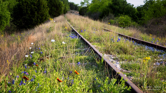 Rail of Flowers