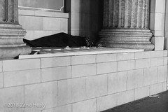 Down and Out on Hollywood Blvd