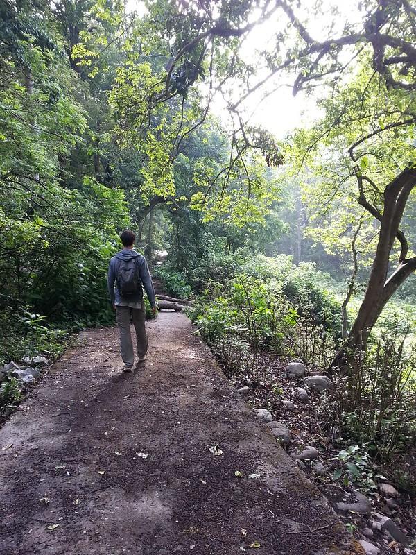 2018-05-14 07.44.55_preview Индия. Национальный парк Джим Корбетт. Индия. Национальный парк Джим Корбетт. 42324391544 a7bfef53bb c