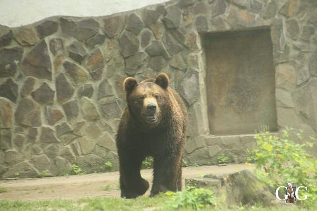 Besuch Zoo Sosto 18.06.2018106