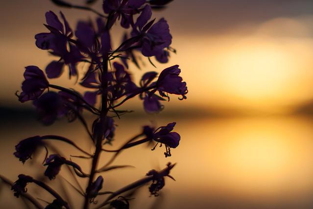 Summer sunset [Explore], Canon EOS 5D MARK II, Canon EF 50mm f/1.2L