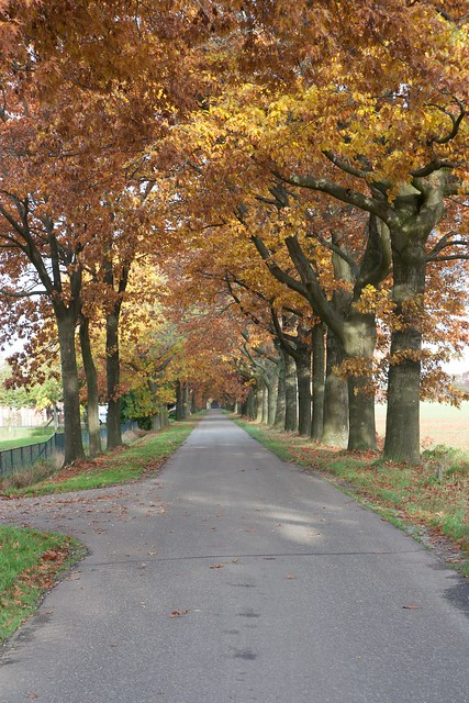 Midland Hunt Landhorst 2015-9143