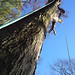 tree removal alpharetta ga