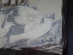 Saqqara - Imhotep Museum