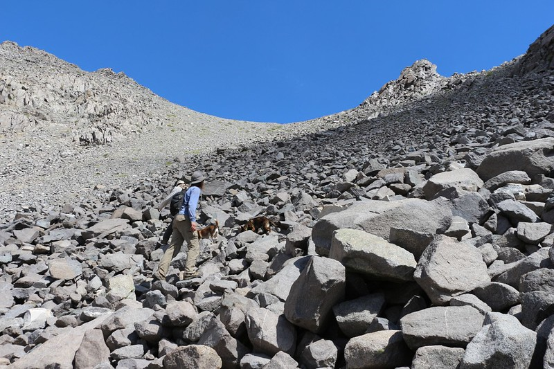 The dogs seem to be climbing the large blocks of talus just fine as we head to the saddle