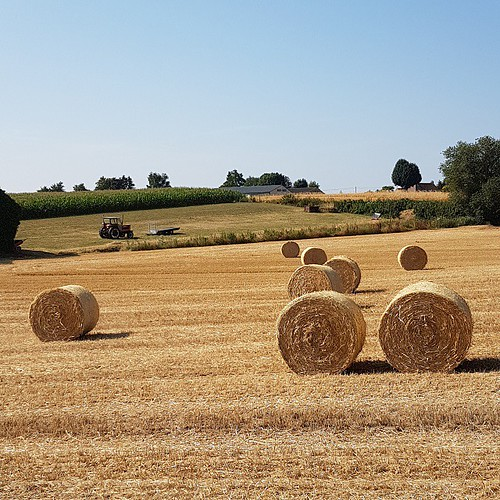 Amazing Golden Hay Bales Field