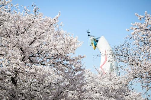 桜に囲まれる太陽の塔