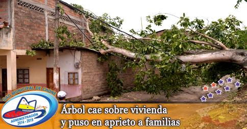 Árbol cae sobre vivienda y puso en aprieto a familias