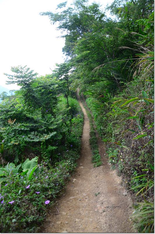 紅楠坑山(龜山、茅子埔山)登山步道 2