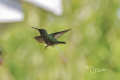 even hummingbirds eliminate
