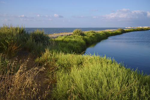 Salt marshes of Samouco  #tagus #tejo #nature #portugal #t3mujinpack