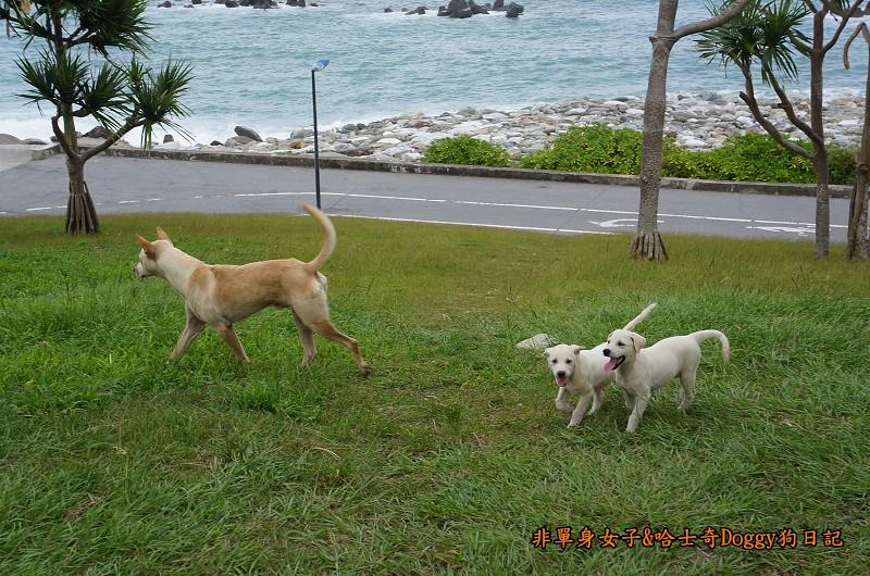 花蓮半日遊2-16太平洋公園16