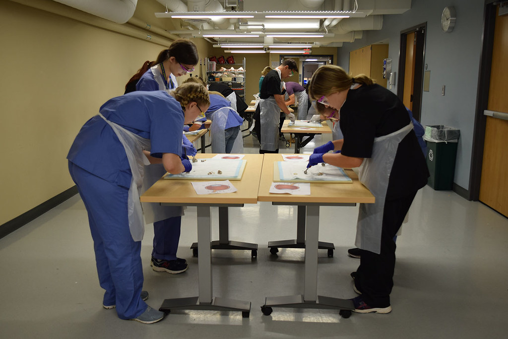 Pre-College Program Ocular Dissection Lab