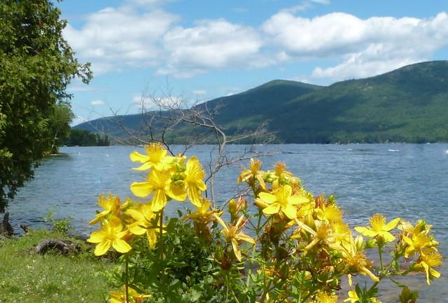 Shoreline flowers
