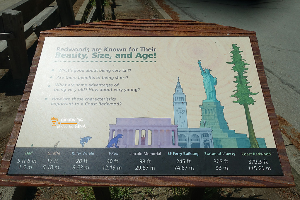 美國自助/自駕》舊金山北部景點 墨爾紅木公園/穆爾森林國家紀念地 (Muir Woods National Monument) 一個人旅行半日遊推薦 @Gina Lin
