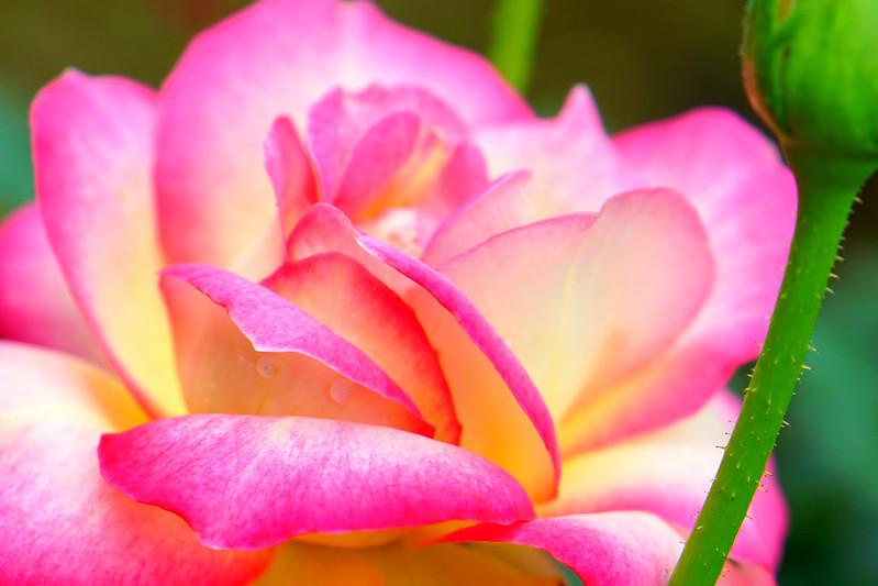 花マクロ2