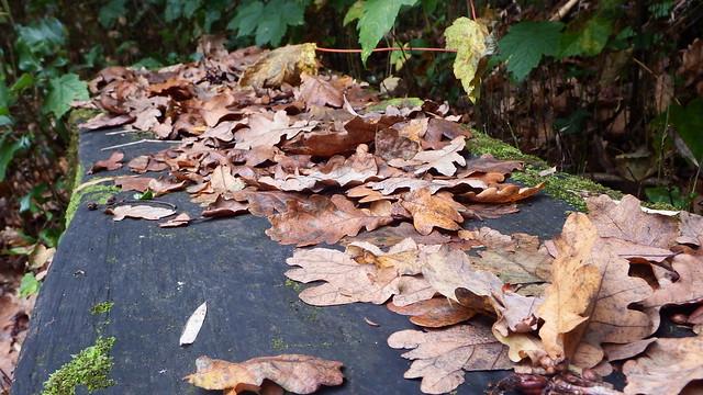 Autumn, Fujifilm FinePix SL1000