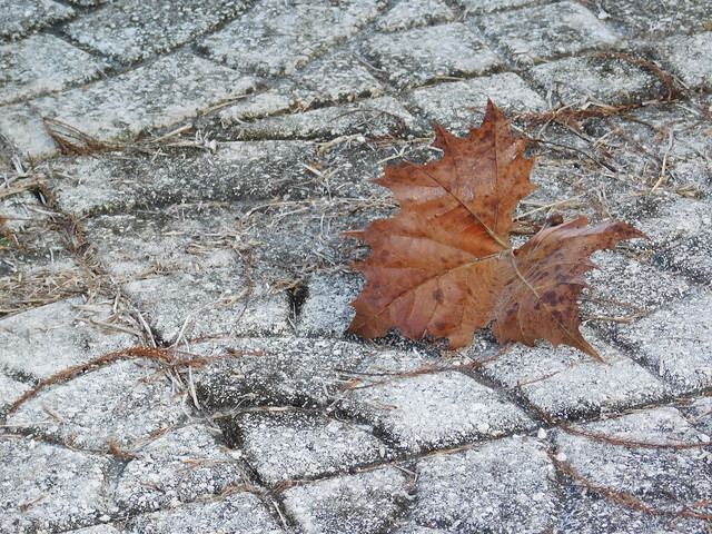 the fall..., Nikon COOLPIX L840