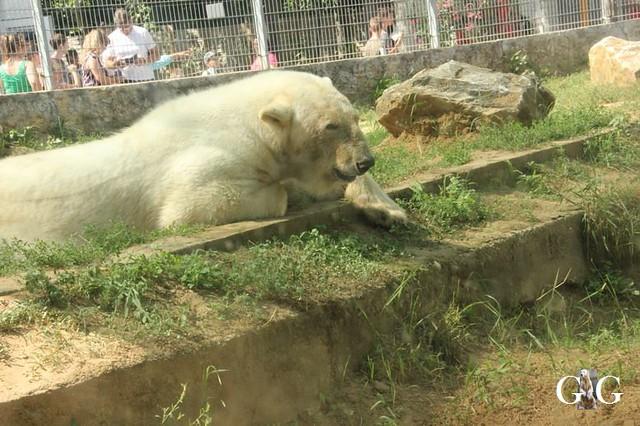 Besuch Zoo Sosto 17.06.201820