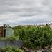 Scotland's Gardens Craigintinney Telferton July 2018 -6