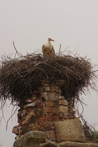 Stork on the aqueduct