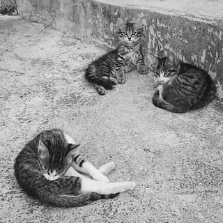 Oscar, Otis e Missy