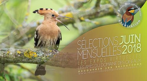 Les sélections JUIN 2018 - Les Amis du Domaine des Oiseaux