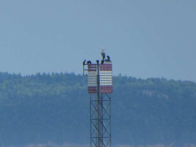 Whale watching. Bay of Fundy, from St Andrews, New Brunswick.