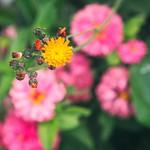 20180715-153006 - Wild & Garden Flower Bokeh